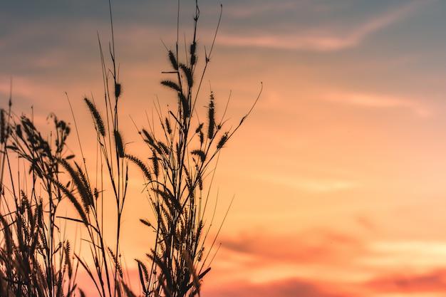 美しい農村自然夏の夕日の風景の背景に野生の草