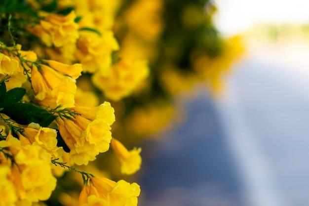道路上の黄色い花の花は、自然の背景をぼかし