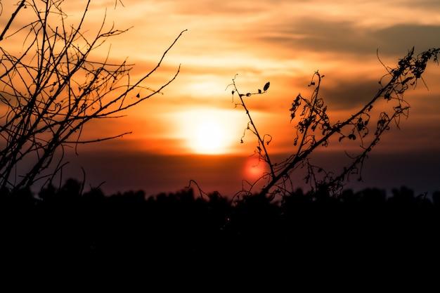 オレンジ色の夕日日の出空に対して冬の葉のない乾燥木