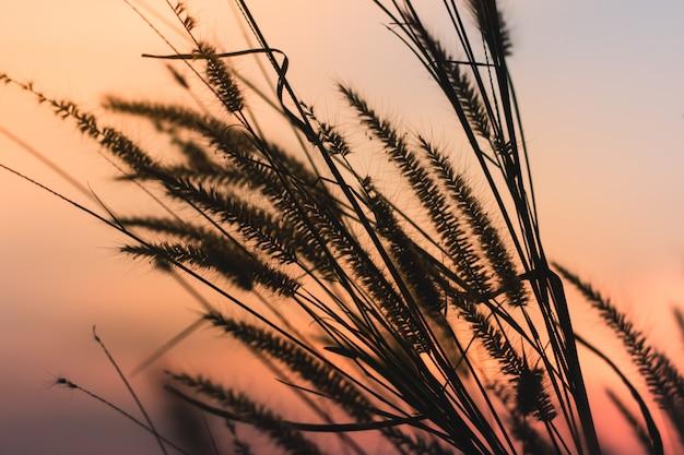 美しいロマンチックな夕日を背景に野生の草を振っていると美しいシーン