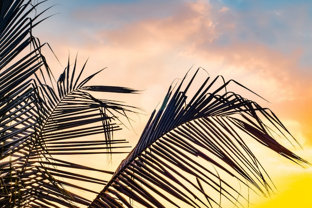 カラフルなボケ太陽の光と夕焼け空雲の抽象的な背景を持つ熱帯ヤシの木