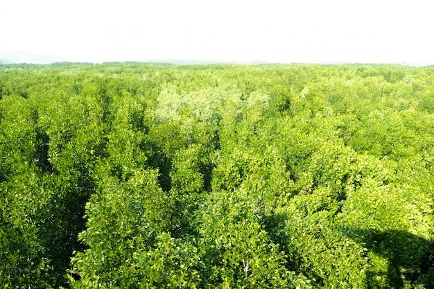 空中のトップビュー森林、自然山背景の上から森林ビューのテクスチャ