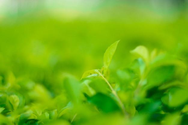 夏の日差しの下で庭の緑の葉のクローズアップの自然の景色。