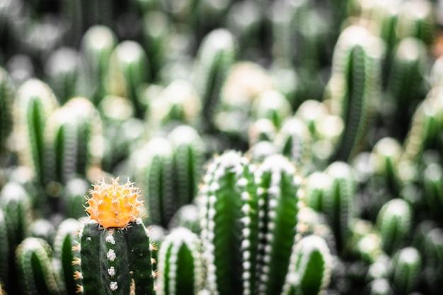 Крупный желтый цветок
