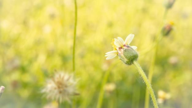 小さな花、美しい自然、調色デザイン春の自然、太陽の植物。夏の休日のアイデア