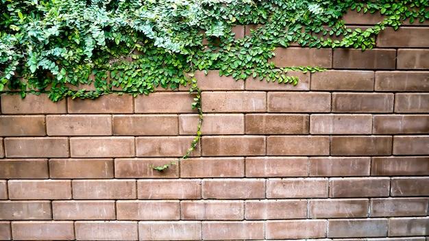 古いテクスチャレンガの壁、背景、アイビーで覆われている詳細なパターン
