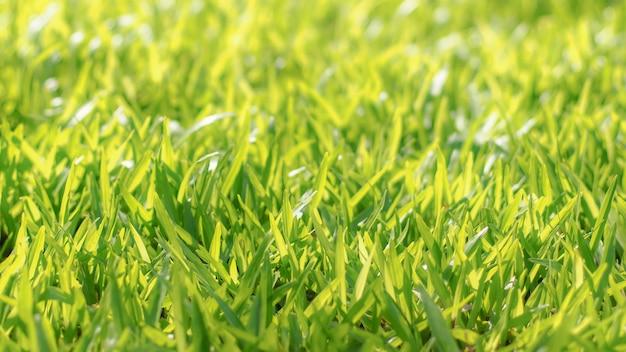 自然の屋外の芝生や芝生のクローズアップ