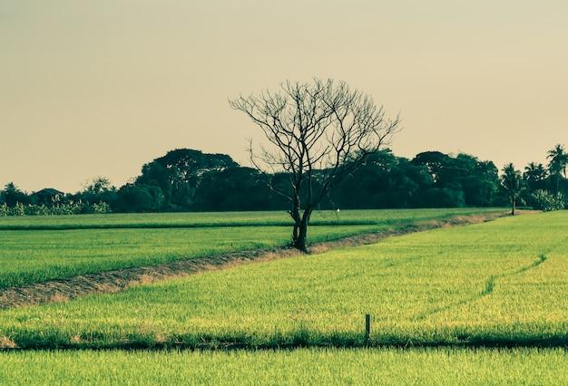 緑の野原の真ん中に単独で乾燥した木