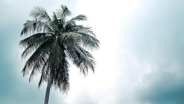 ココナッツの木は空に単独で立つ
