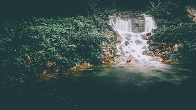暗い雨の森の滝