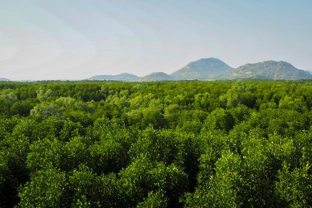 森林。緑の山の森の風景。霧の深い山の森。素晴らしい森の風景。雲の風景の中の山の森。霧の森。山の森の風景。