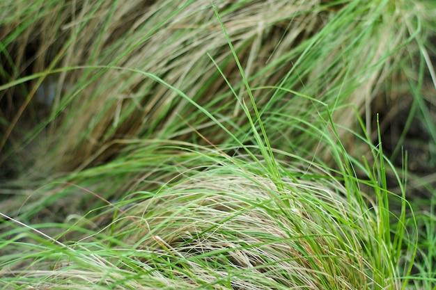 風に吹く芝生