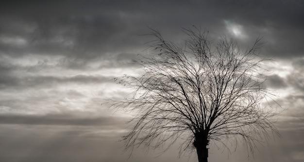 曇りオランダの空に対して秋の木