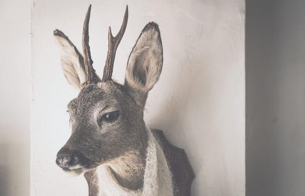 ショールと鹿の頭