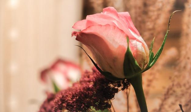 ピンクのバラのクローズアップ