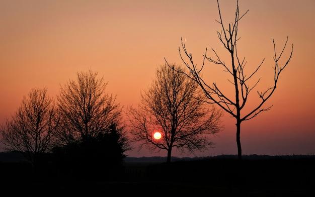Дерево на лугах в сельской местности на закате голландский нидерланды весна