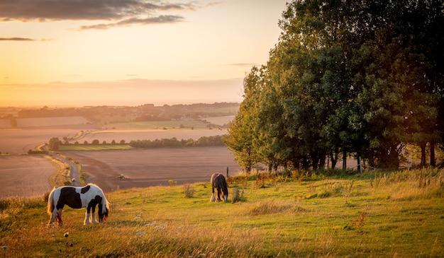 草木と差し出されたビューを放牧青黄色とオレンジ色の暖かい日光の下で田園風景に放牧馬