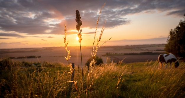 Лошади пасутся в сельском ландшафте под теплым солнечным светом с синими желтыми и оранжевыми цветами, пасущимися деревьями травы и растянутый