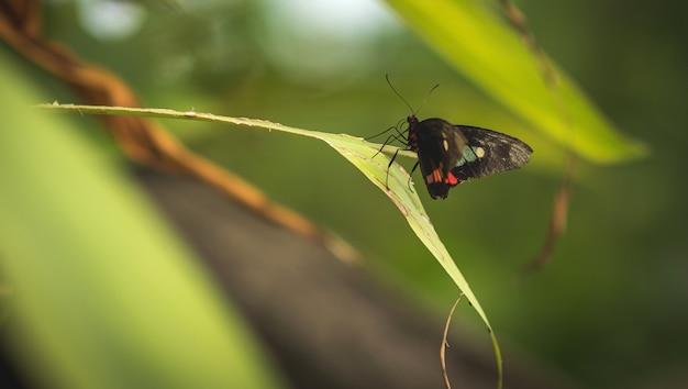 赤と白の蝶と黒は葉のクローズアップ