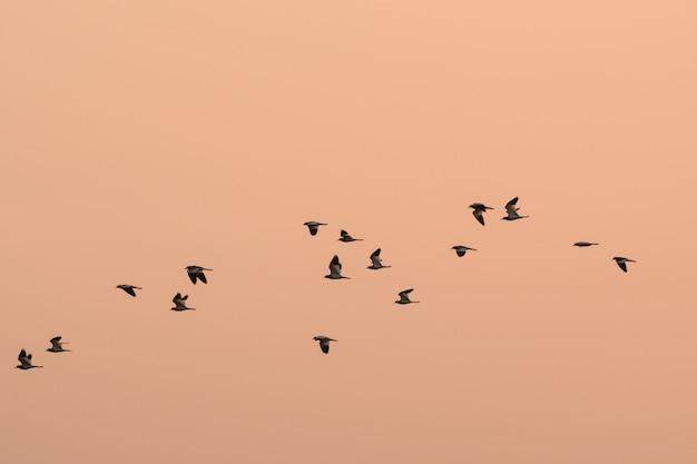 多くの鳥が飛んでいます新しい生息地を見つけるために移動するには