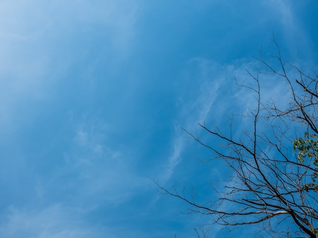 青い空と木々。