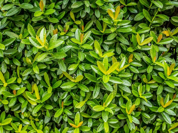 緑色の葉。