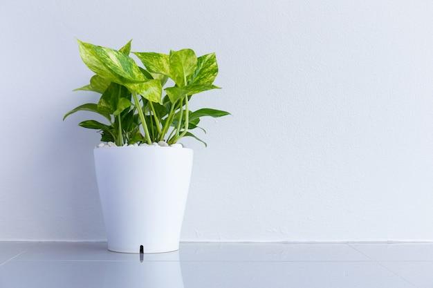 観賞用の植物。お金はタイに流れます。