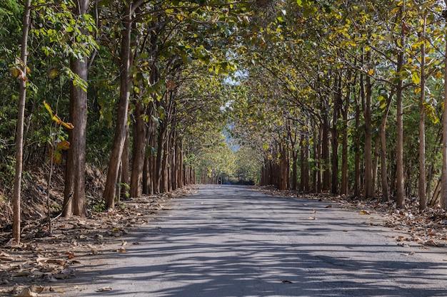 チークの木の美しい道。