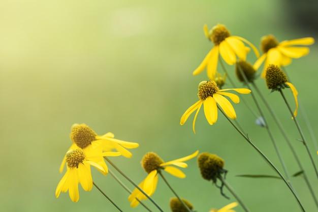 Желтый цветок в саду.