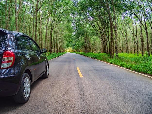 木々の美しい道