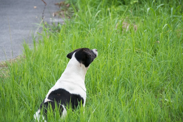 草の上に座っている犬