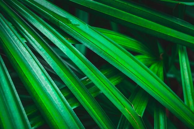 緑のヤシの葉のクローズアップ