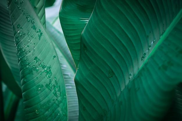 バナナの葉のクローズアップ