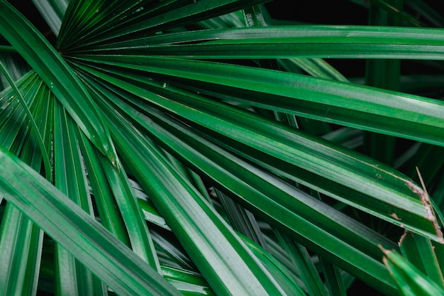 緑のヤシの葉の自然な背景