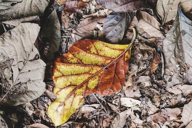 地面に落ちた乾燥した葉の背景