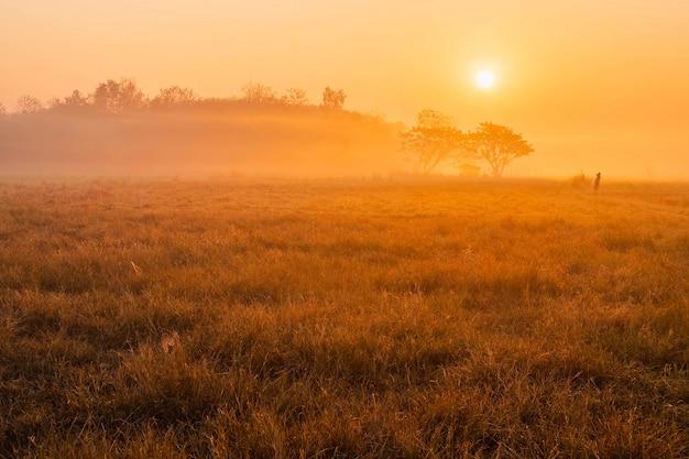草地と朝の太陽の美しい風景