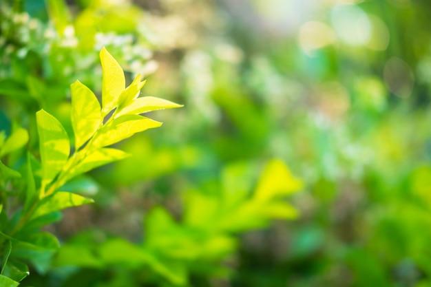 クローズアップ自然緑の葉新鮮な背景