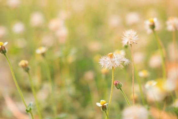 Летний цветочный фон