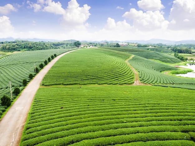 茶園の空撮、無人機からのショット