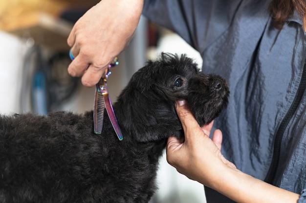 犬用美容院のサロンで小さな犬の毛を切断する