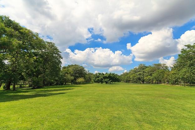 美しい公園の緑の木