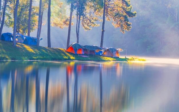森の中の水の反射と松の森の下でのキャンプ観光とテント