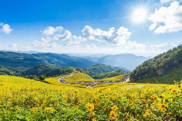 山の上の黄色い花