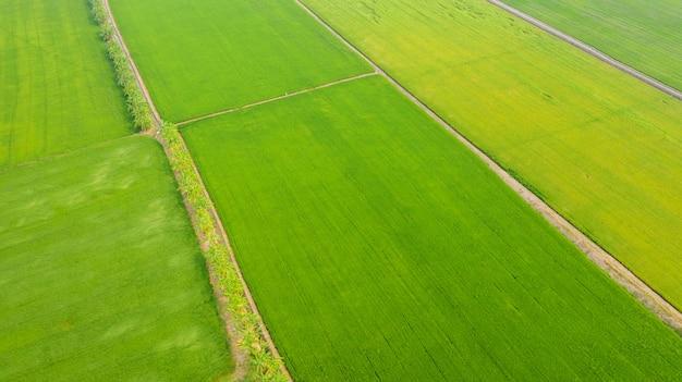 黄色と緑の田んぼの空撮