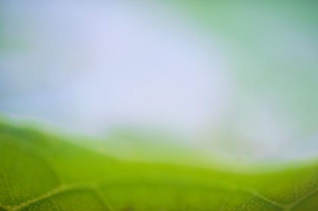 夏の日の出背景に抽象的なぼやけた美しい緑色の光