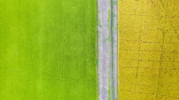 上からの緑と黄色の田んぼの空中平面図