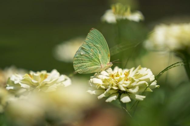 白い花に白い蝶