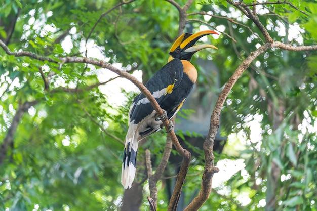 サイチョウ、木の上の鳥
