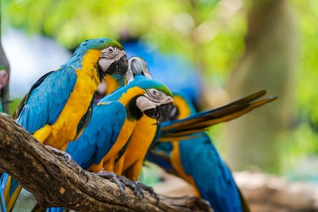 木の枝にカラフルなコンゴウインコのグループ