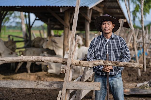 牛舎と彼の牛のカウマン